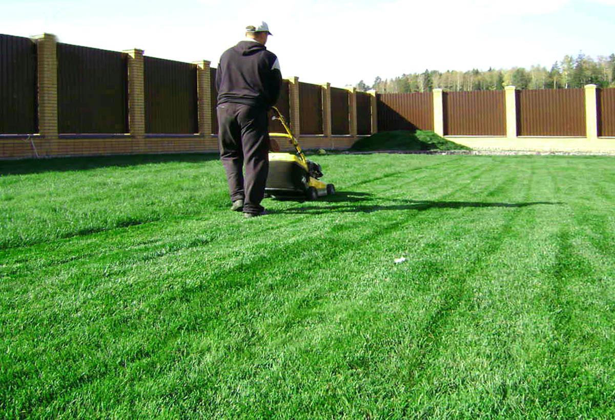 Как сажать газон сеялкой