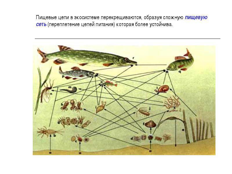 сеть для ловли окуня
