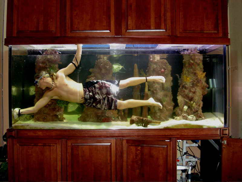 a overview of the process of maintenance on fish aquariums